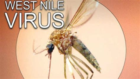 Number of Oklahoma West Nile Virus Deaths Now Two