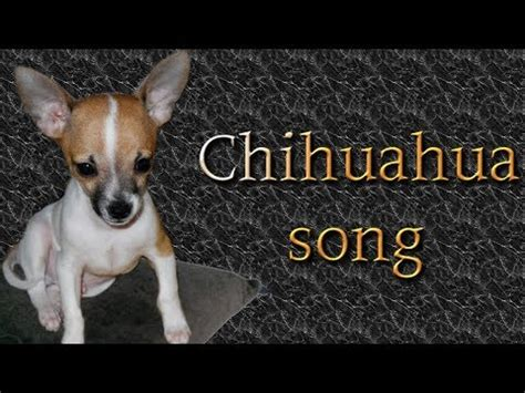 Chihuahua song - YouTube