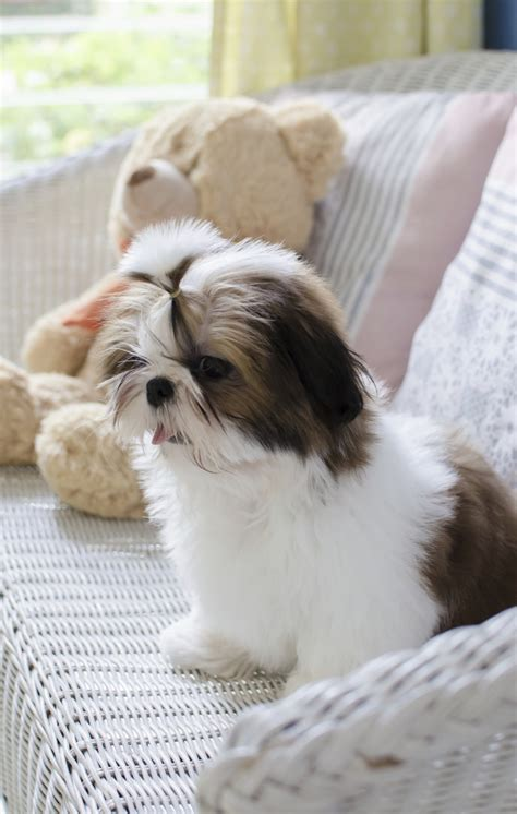 Why Buy From a Responsible Breeder? – American Kennel Club