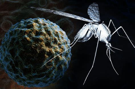 West Nile virus: Deadly mosquito infection on the rise in